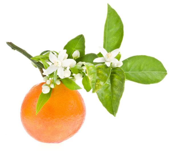 huile-essentielle-petit-grain-sur-fleur-bio