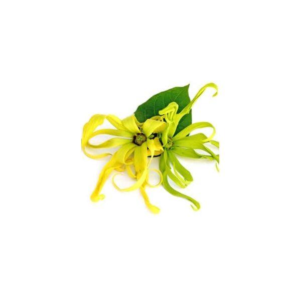 huile-essentielle-ylang-ylang-bio