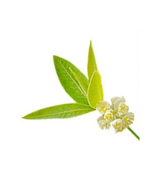 litsee-citronnee